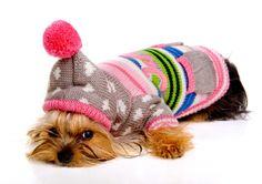 Perro Yorkshire terrier Sombrero del invierno Suéter Cachorro Animalia
