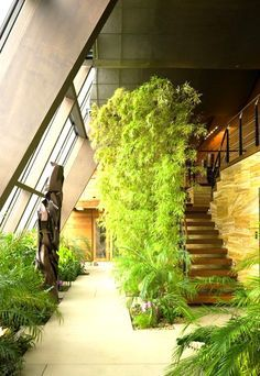 Indoor Gardening This garden resembles the inside garden of the Featherston House. The garden is placed towards the north facing windows near the pond. - These homes take house plants to the next level. Earthship Home, Earthship Design, Atrium Design, Corridor Design, Lobby Design, Earth Homes, Natural Building, Interior Garden, Interior Design