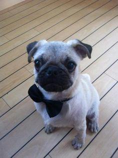 what a dapper little chap