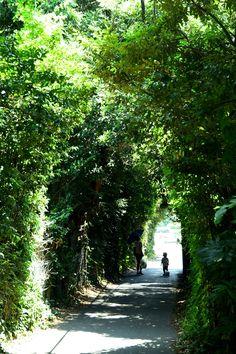 「トンネルのような道」(市川市宮久保) The Road like a tunnel / Miyakubo,Ichikawa city,Japan