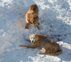 January 1, 2013 Daisy and Duke Play In The Snow! | Plein Aire in Maine