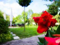 Garten-Salzburg-Parkhotel-Brunauer-Fruehling-Wiese Salzburg, Hotels, Park, Plants, Garten, Parks, Plant, Planting, Planets