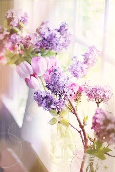 Spring window (by lucia and mapp)