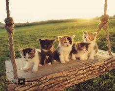 kittens on a swing