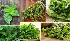 10 alimentos curativos que puedes crecer en tu hogar.