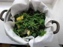 Jak připravit domácí kopřivový sirup Seaweed Salad, Spinach, Menu, Homemade, Vegetables, Ethnic Recipes, Health, Food, Syrup