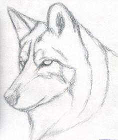 Simple wolf sketch