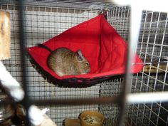 Cosy Corner Hammock (CCH) how to | Degu and Chinchilla World