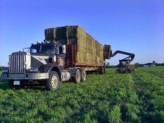 Peterbilt 351 | Alfalfa Bales Farmfield