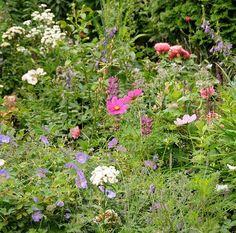 Eure Gartenbilder, Beete, Gestaltungsideen 2011 / 2012 - Seite 352 - Gartengestaltung - Mein schöner Garten online