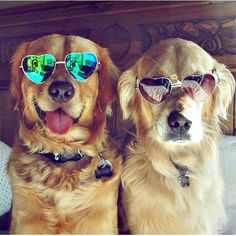 Golden shades