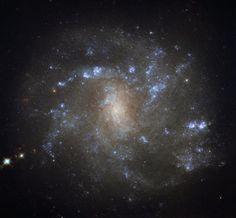 The NASA/ESA Hubble Space Telescope has captured a stunning image of the nearby galaxy NGC 2500, also known as LEDA 22525 and IRAS 07581+5052. NGC 2500 is a barred spiral galaxy discovered by British astronomer William Herschel on March 9, 1788. The galaxy is approximately 25,000 light-years across and lies 32 million light-years away in the northern constellation of Lynx. Barred spirals like NGC 250 are actually more common than was once thought.