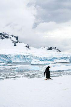 Der schönste Tag in meinem Leben - eine Reise in die Antarktis Photography Guide, Travel Photography, Antarctica Destinations, Birds That Cannot Fly, Iceberg, Wale, Arctic Animals, Zoology, Beautiful Landscapes