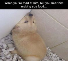 5 Funny Pictures Of Today - #funnymemes #funnypictures #funnytexts #funnyquotes #funnyanimals #funny #lol #haha #memes