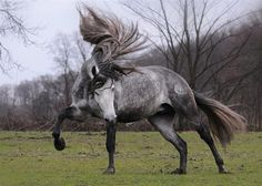 I want this horse. She's pretty