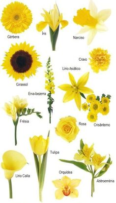 Have you ever found a picture of a bouquet and wondered What is that flower Here is a collection of flower names sorted by color A few bouquet examples are at the bottom and so Yellow Wedding Flowers, Flower Bouquet Wedding, Yellow Flowers, Flower Bouquets, Wedding Flower Decorations, Flowers Decoration, Wedding Themes, Types Of Flowers, Daffodils