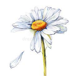 Daisy (series C) stock illustration. Illustration of object - 15928357 Daisy (series C). Painting of Daisy Flower Drawing, Daisy Flower Tattoos, Daisy Art, Floral Drawing, Flower Art, White Daisy Tattoo, Daisies Tattoo, Daisy Tattoo Designs, Watercolor Daisy Tattoo