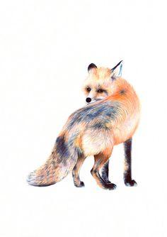estampes - art fox - fox illustration - renard - pépinière tirages d'art - art de mur - créatures des bois - 8,5 x 11 pouces