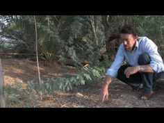 Greening the Desert with Geoff Lawton, Original and Update: 2 of 4 - YouTube