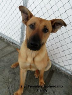 CANDY located in Elizabethtown, 2 BE KILLED SEPT 26th, 2015!! ADOPT HER NOW, BEFORE THIS PRECIOUS BEAUTY IS KILLED!!!