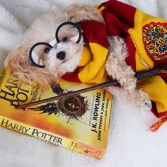 The moment that made you laugh? Love Harry Potter? Visit us: WorldOfHarry.com #HarryPotter #Harry_Potter #HarryPotterForever #Potterhead #harrypotterfan #jkrowling #HP