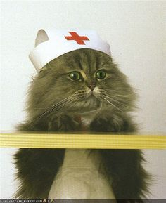 This is what my cat Mo (Dinah) would look like in a nursing cap (after she bit my hand off trying to put it on, lol!)