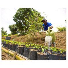 morning shower ☀️ #MarleyCoffee #FarmLife ☕️ #Jamaica : @loubopp