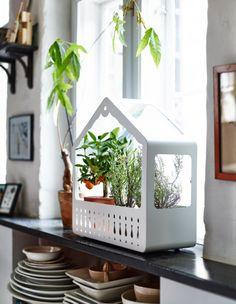 Creëer je eigen mini kruidentuintje met de IKEA PS 2014 plantenkas. #IKEAPS2014