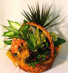 hungary Plants - Flower Garden in cart