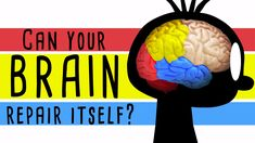 Could your brain repair itself?
