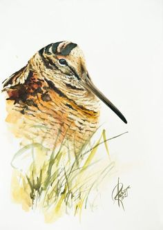 Buy Woodcock, Watercolour by Andrzej Rabiega on Artfinder. Discover thousands of other original paintings, prints, sculptures and photography from independent artists.