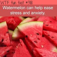 Image result for wtf fun facts diet