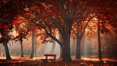 Umbrella by ildiko-neer on deviantART