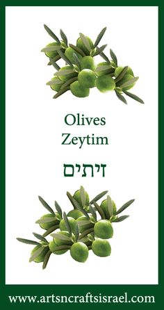 How to say Olives in Hebrew. #Hebrew #Olives #OliveTree