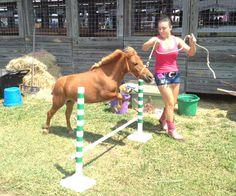 miniature horses | ... her mini horse windsor before competing in the 4 h miniature horse
