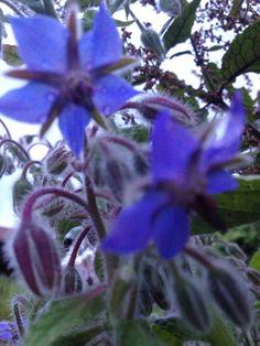 Boretsch Flora, Plants, Garten, Plant, Planting, Planets