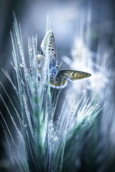 Fresh morning by Sam Bastien on Fivehundredpx Butterfly Kisses, Butterfly Flowers, Blue Butterfly, Blue Flowers, Butterfly Pictures, You Give Me Butterflies, Beautiful Butterflies, Beautiful Birds, Beautiful Things