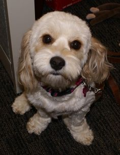 We love Bella! She's joining us at Sergeant's today!