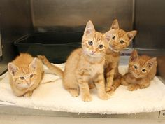 Adopted! Red Ryder, Pulaski, Acorn, & Butternut  have found their forever homes! 9/9/15
