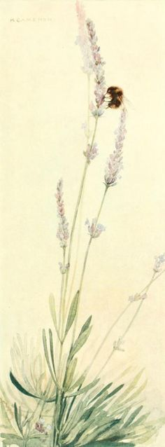 Sweet Lavender. Illustration by Katharine Cameron from  'The Flowers I Love.' Published 1917 by Frederick A. Stokes co.  New York. #Bienen www.apidaecandles.de