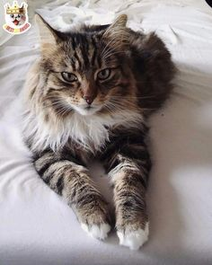 Today's BESTCATAWARD. Wanna get featured? Tag #BESTCATAWARD on Instagram to get featured! :)