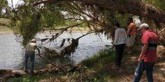 Instalarán nueva señalética que advierte sobre presencia de cocodrilos en Puerto Vallarta