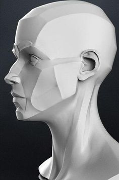 zbrush wall Wall You can find Zbrush and more on our website Facial Anatomy, Head Anatomy, Anatomy Poses, Anatomy Art, Anatomy Drawing, Anatomy Sculpture, Sculpture Art, Planes Of The Face, Drawing Heads