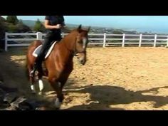 ▶ Over the Back (eliminating stiffness and achieving engagement) - HorseProblems