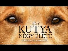 Egy kutya négy élete teljes film magyarul!
