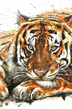 Are You Presently Trying To Find Watercolor Arts Inspirations ? Go To Our Website And Enjoy All Of Our Watercolor Art Album. Watercolor Artwork, Watercolor Animals, Animal Paintings, Animal Drawings, Tiger Artwork, Desenho Tattoo, Mundo Animal, Watercolor Techniques, Wildlife Art