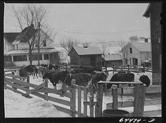 1. Here is a shot of a dairy farm in Viroqua in 1942.