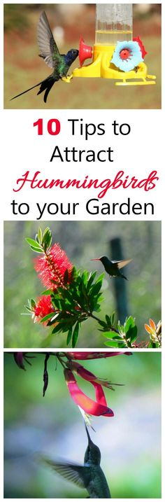 Put these 10 tips to use to attract hummingbirds to your yard and keep them coming back.