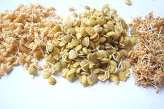 Why sprout grains?