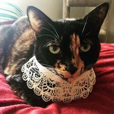 Pretty Cats, Animals, Beautiful Cats, Animales, Animaux, Animal, Animais
